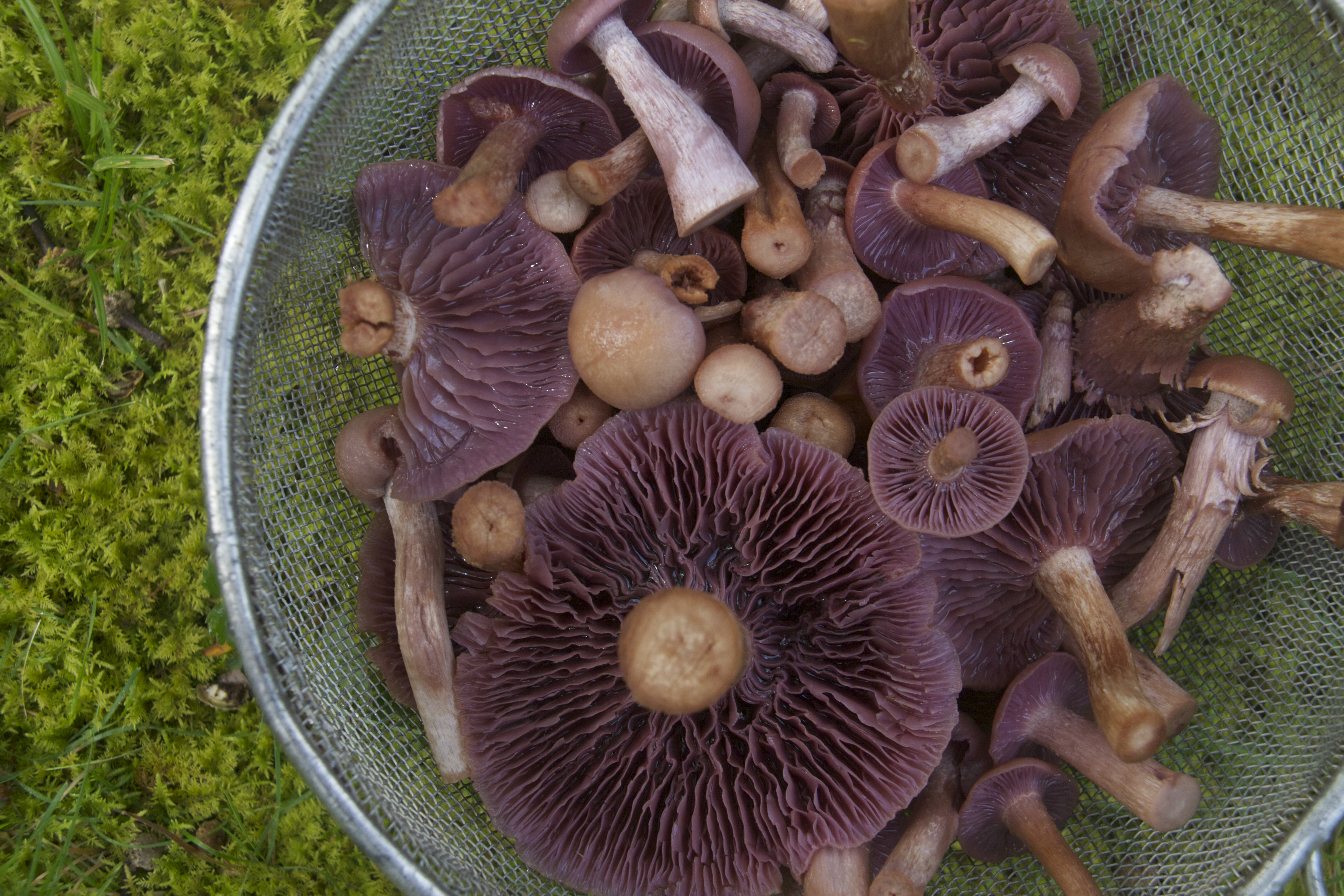 Getting Started with Wild Mushrooms: The Basics