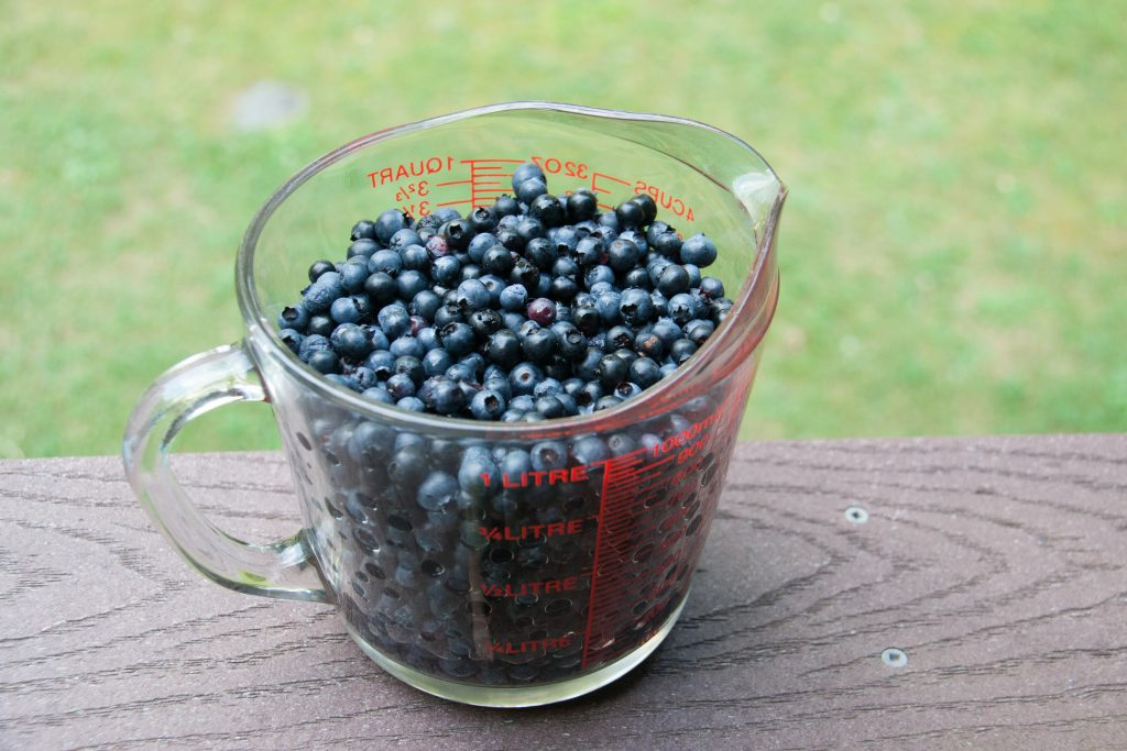 wild blueberries taste like summer
