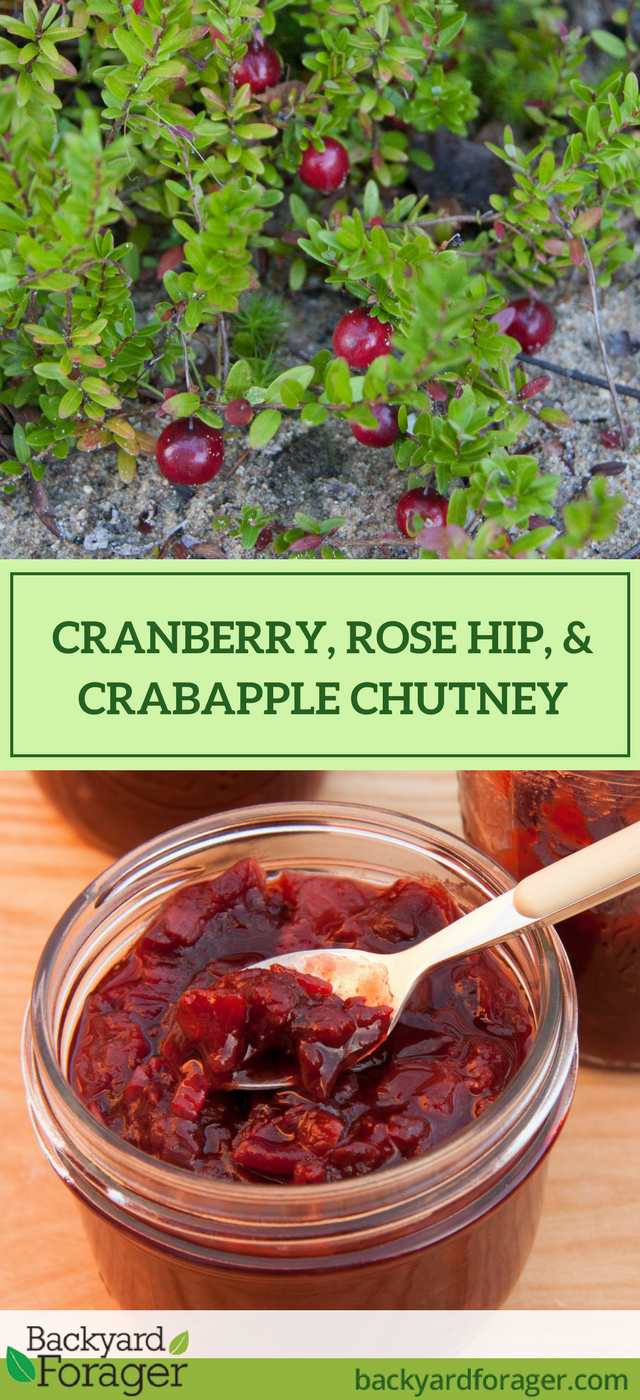 Cranberry, Rose Hip, and Crabapple Chutney