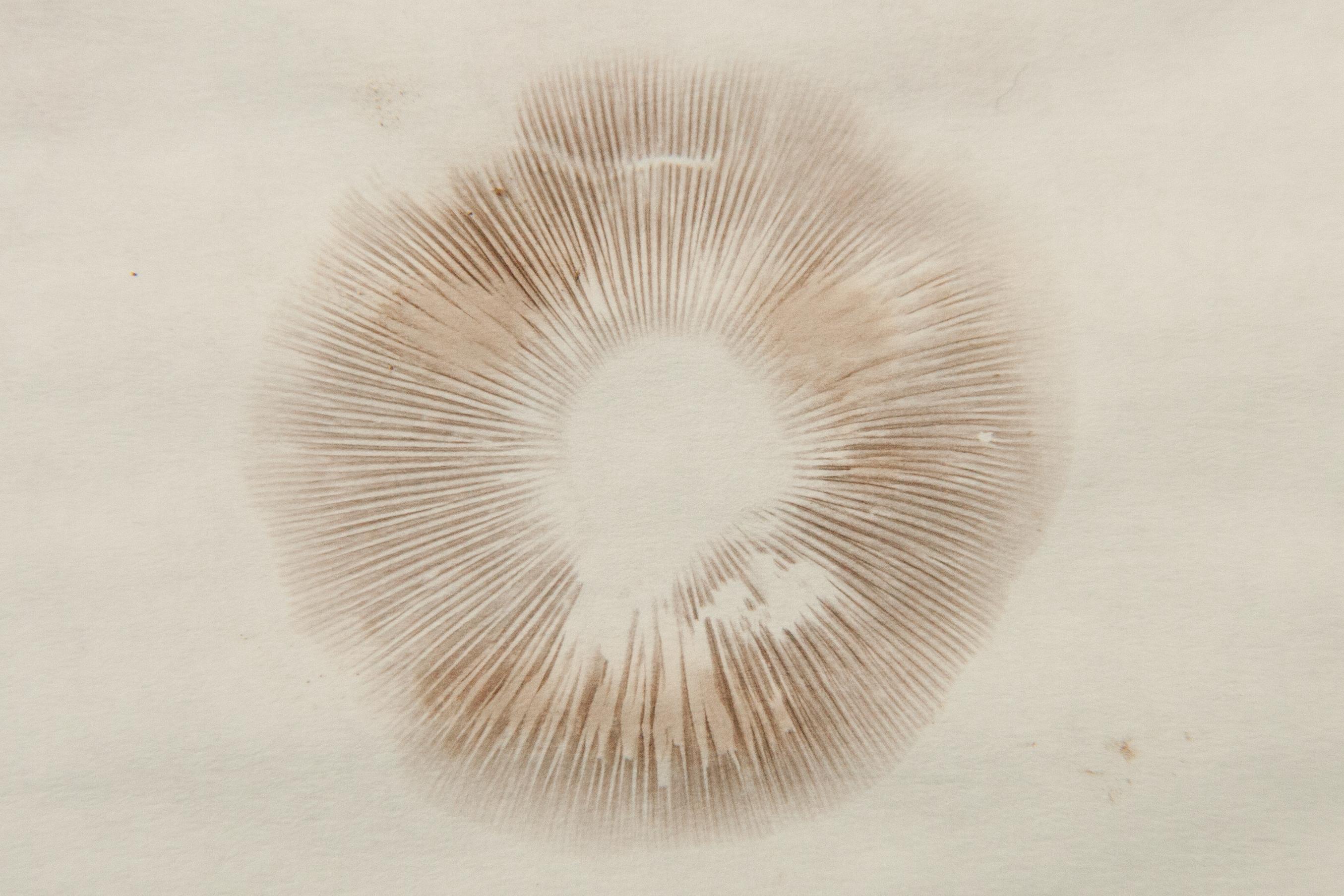 Essential Mushroom Hunting Tools