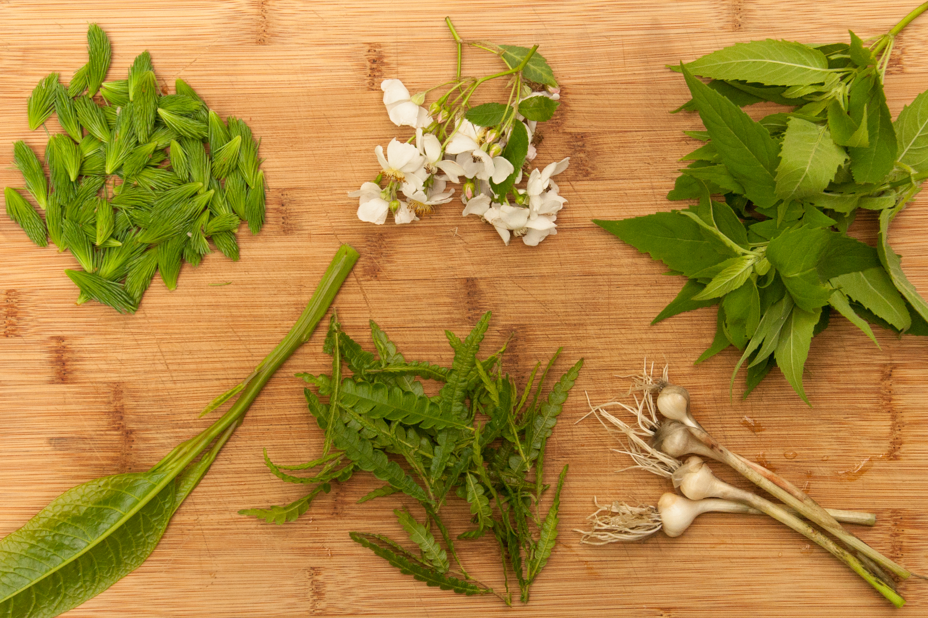 An Online Foraging Course for Beginners