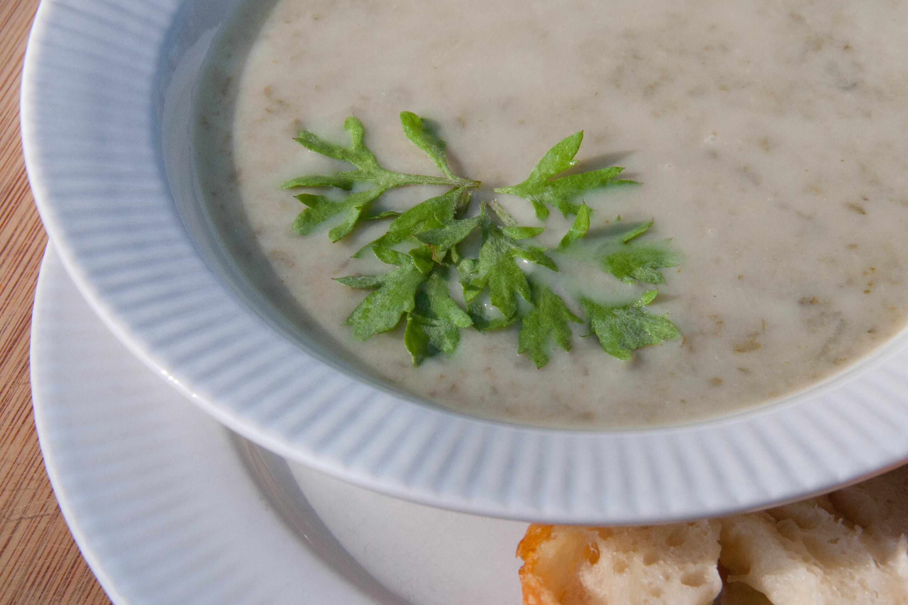 Mugwort Soup Recipe (Artemisia vulgaris)