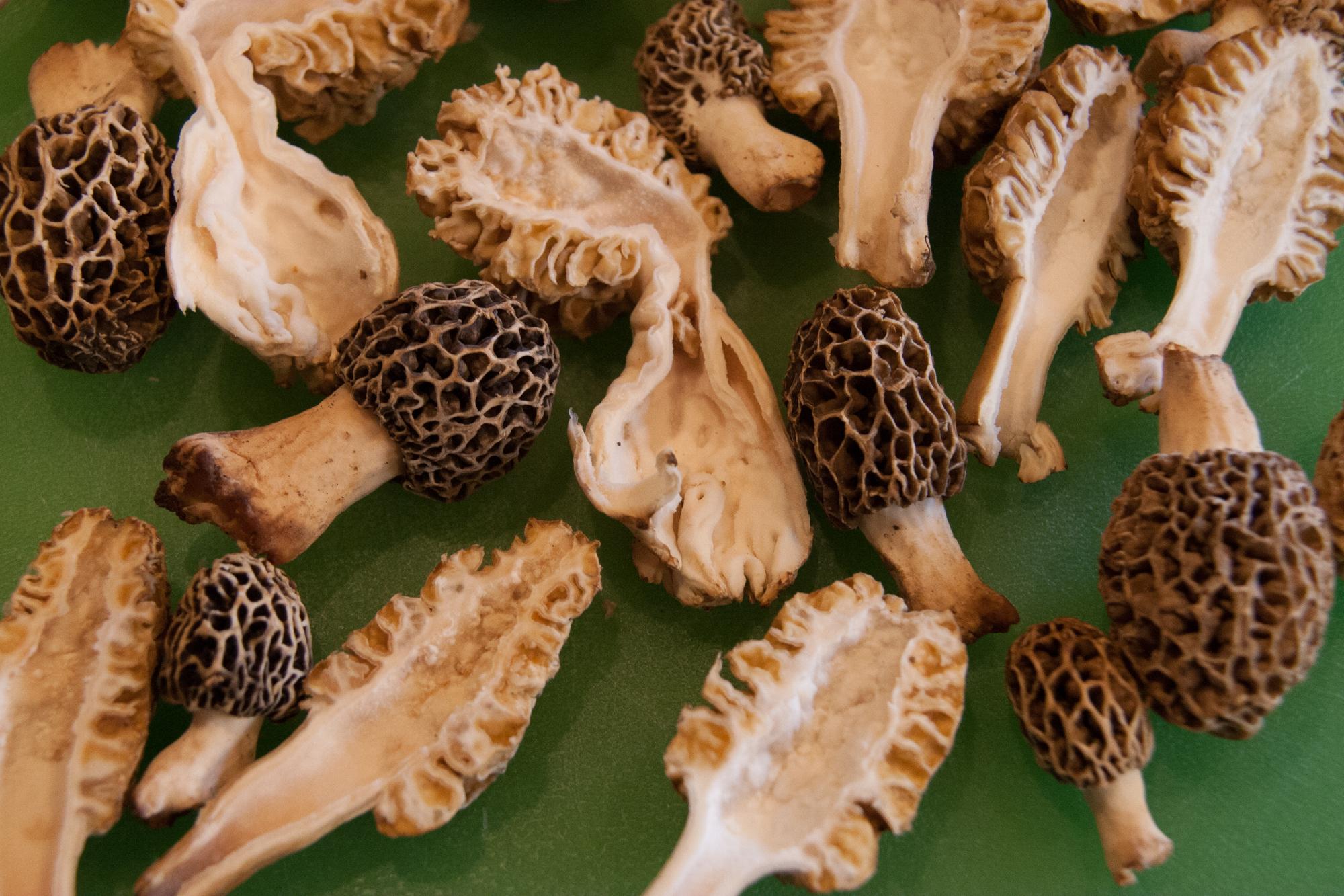 Morels: a Delicious Spring Mushroom