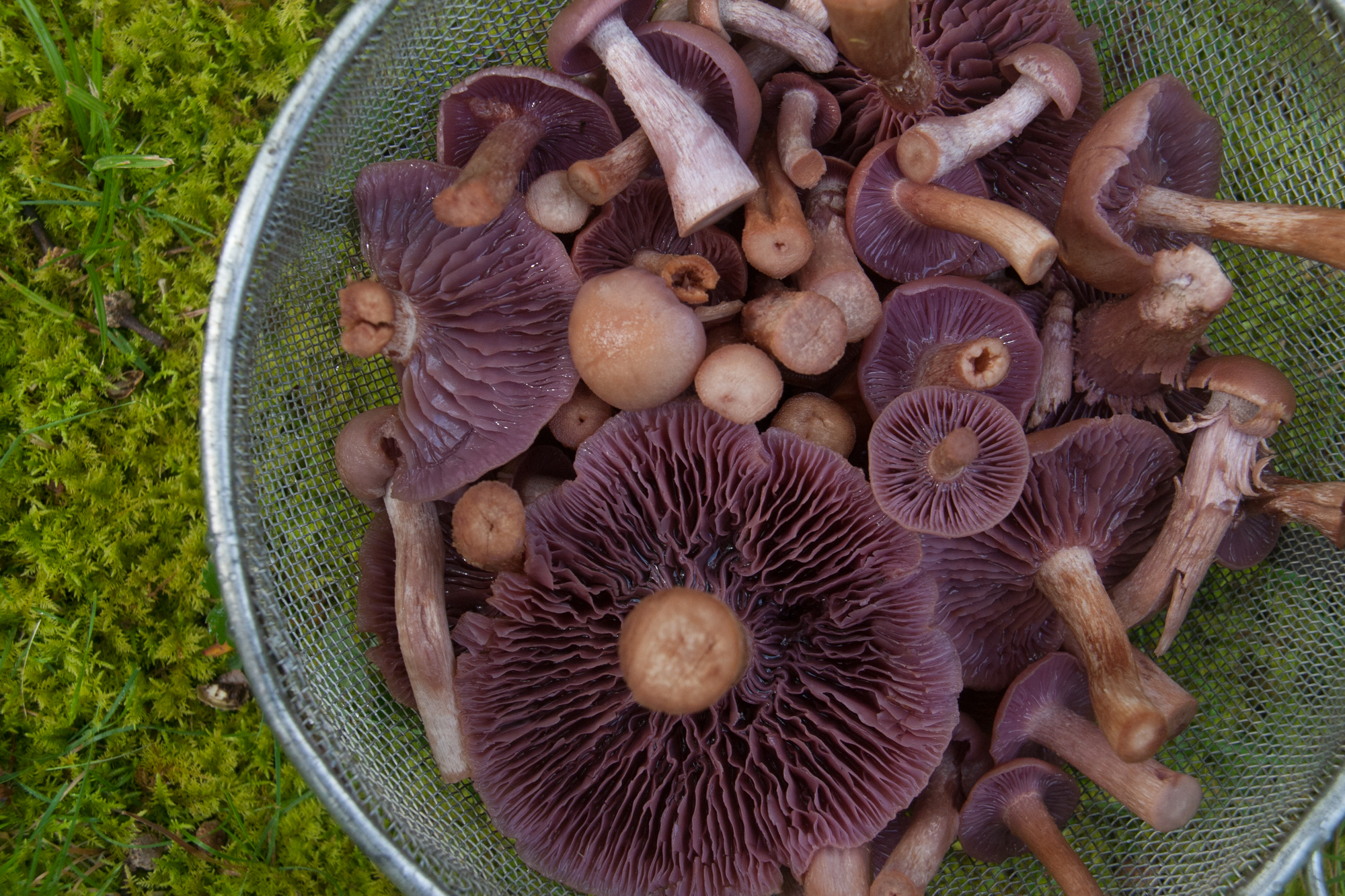 The Best Way to Preserve Your Mushroom Harvest