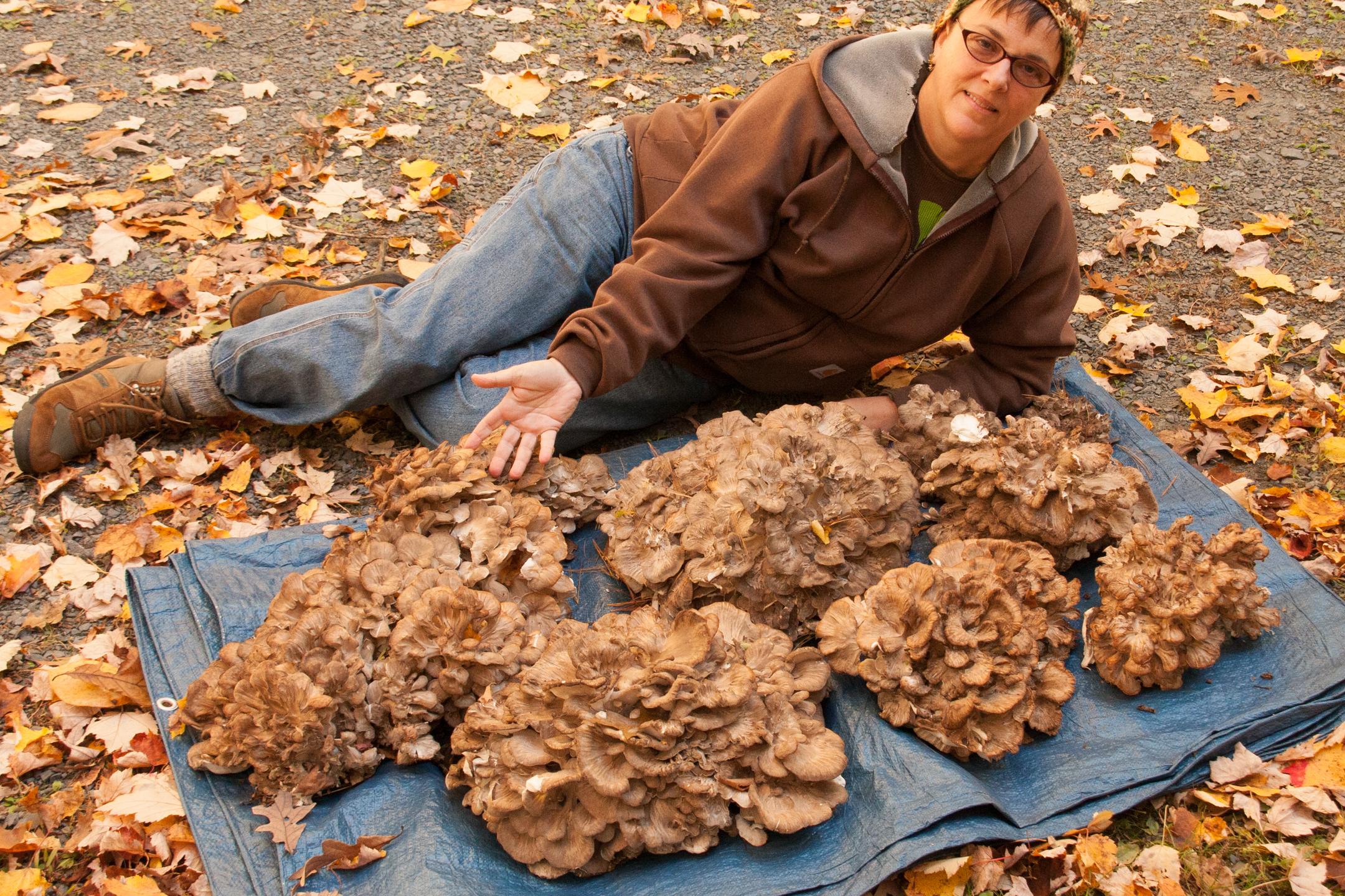 Hen of the Woods: a Great Beginner's Mushroom