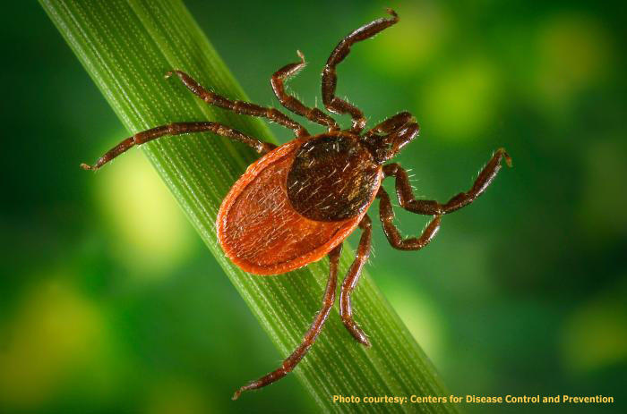 Ticks: How to Minimize Risk and Exposure